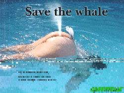 17/218/whale-middle.jpg