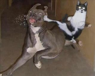 17/393/dog-fighting-cat-middle.jpg