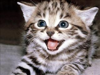 125/583/cute-cat-middle.jpg